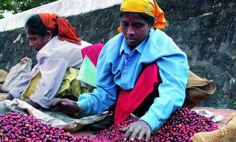 Il ruolo della donna nella filiera del caffè