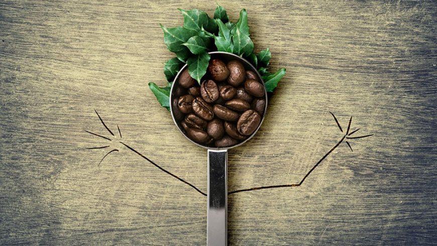 Il caffè e le strategie del cervello