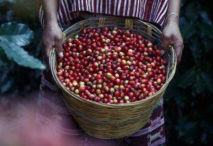 La favola di Yemane alla scoperta dei chicchi di caffè