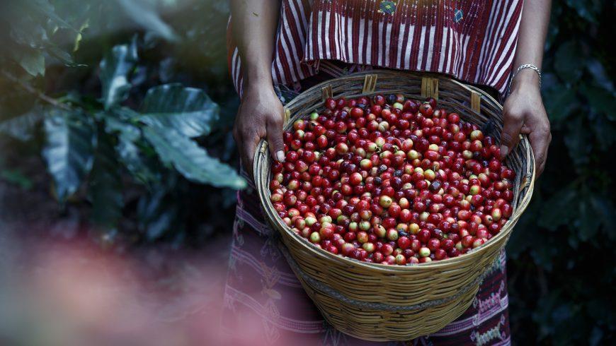 Destinazione Colombia, sulle tracce del caffè